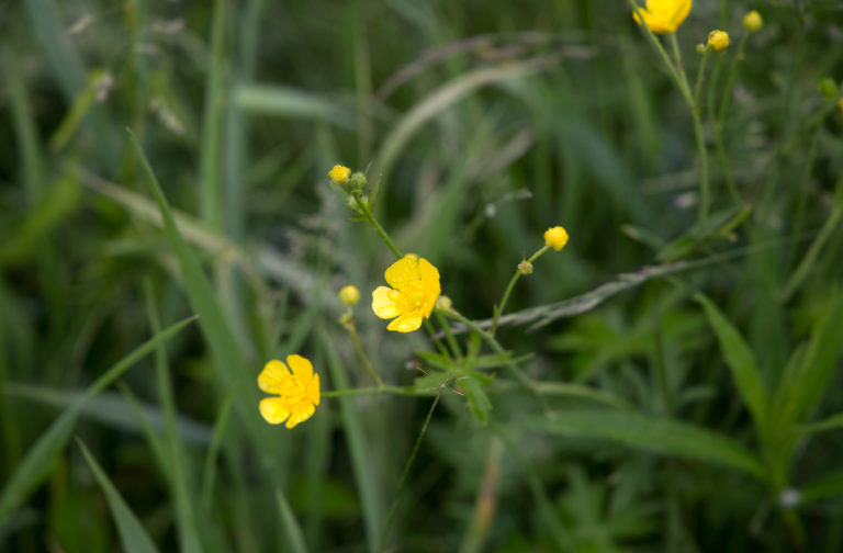 Small Yellow Wild Flowers