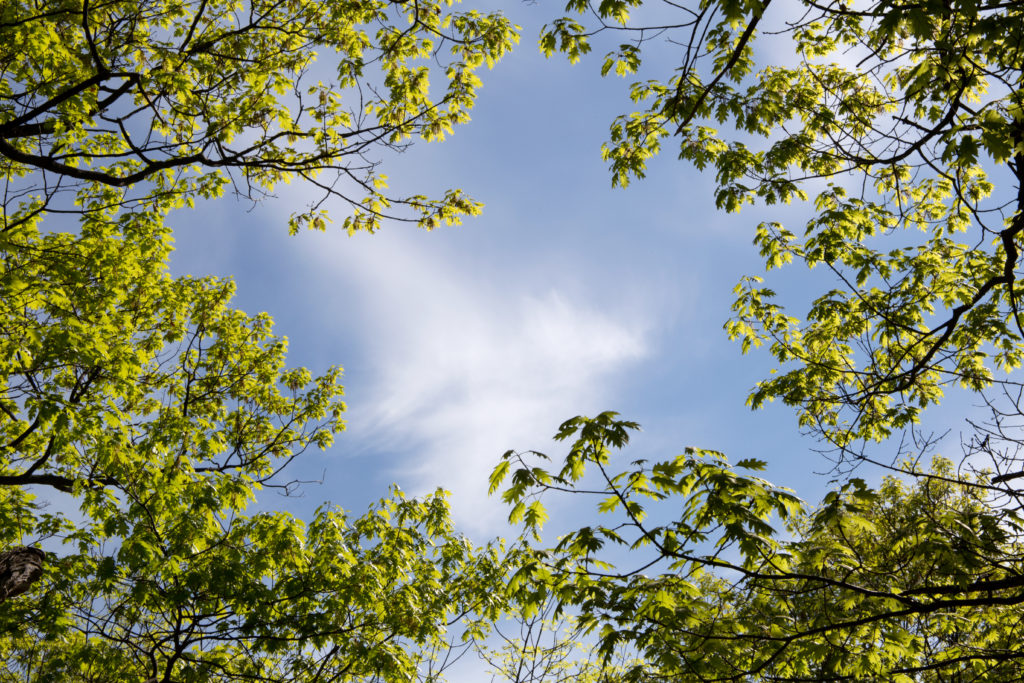 Tree Branches Framing Sky