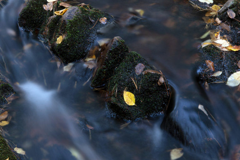 Yellow Leaf in a Dark Stream