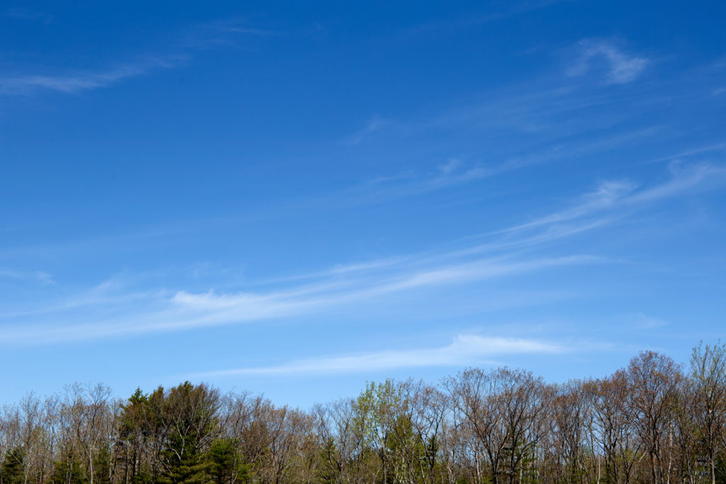 Blue Sky Over Early Spring Trees