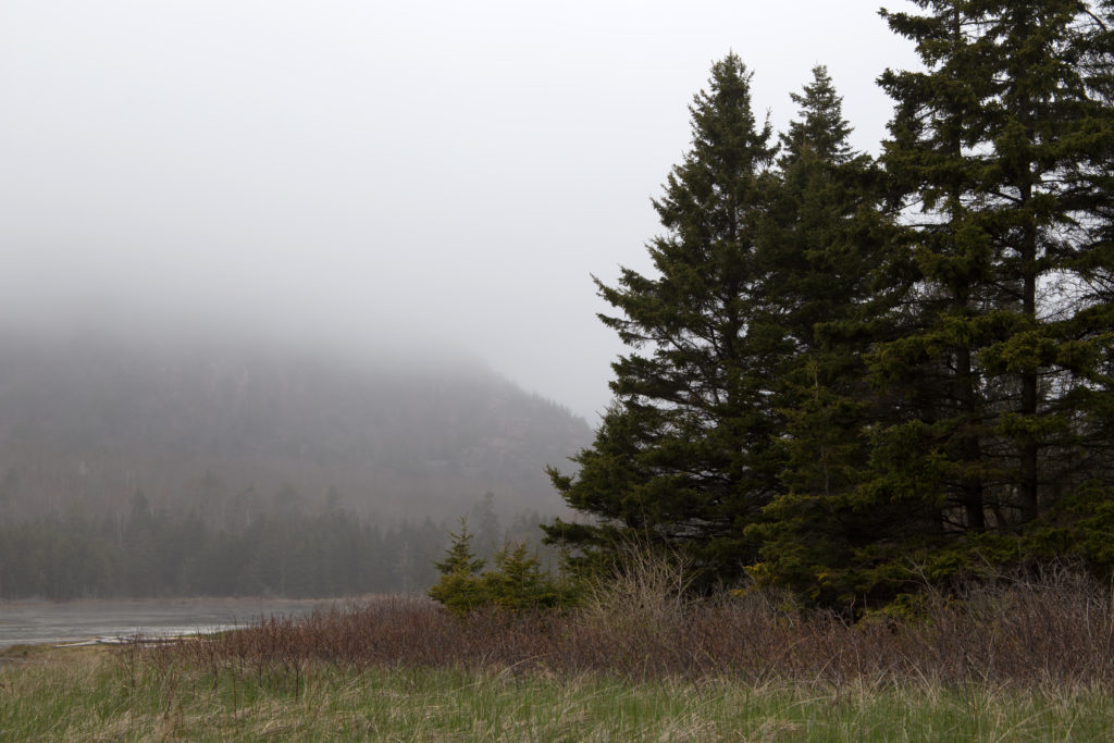Where the Trees Meet the Pond in the Fog