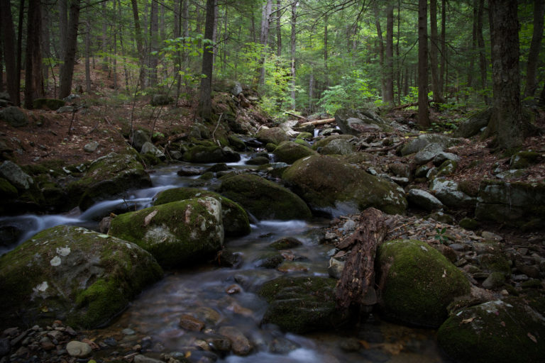 Peaceful Forest Stream on a Hike