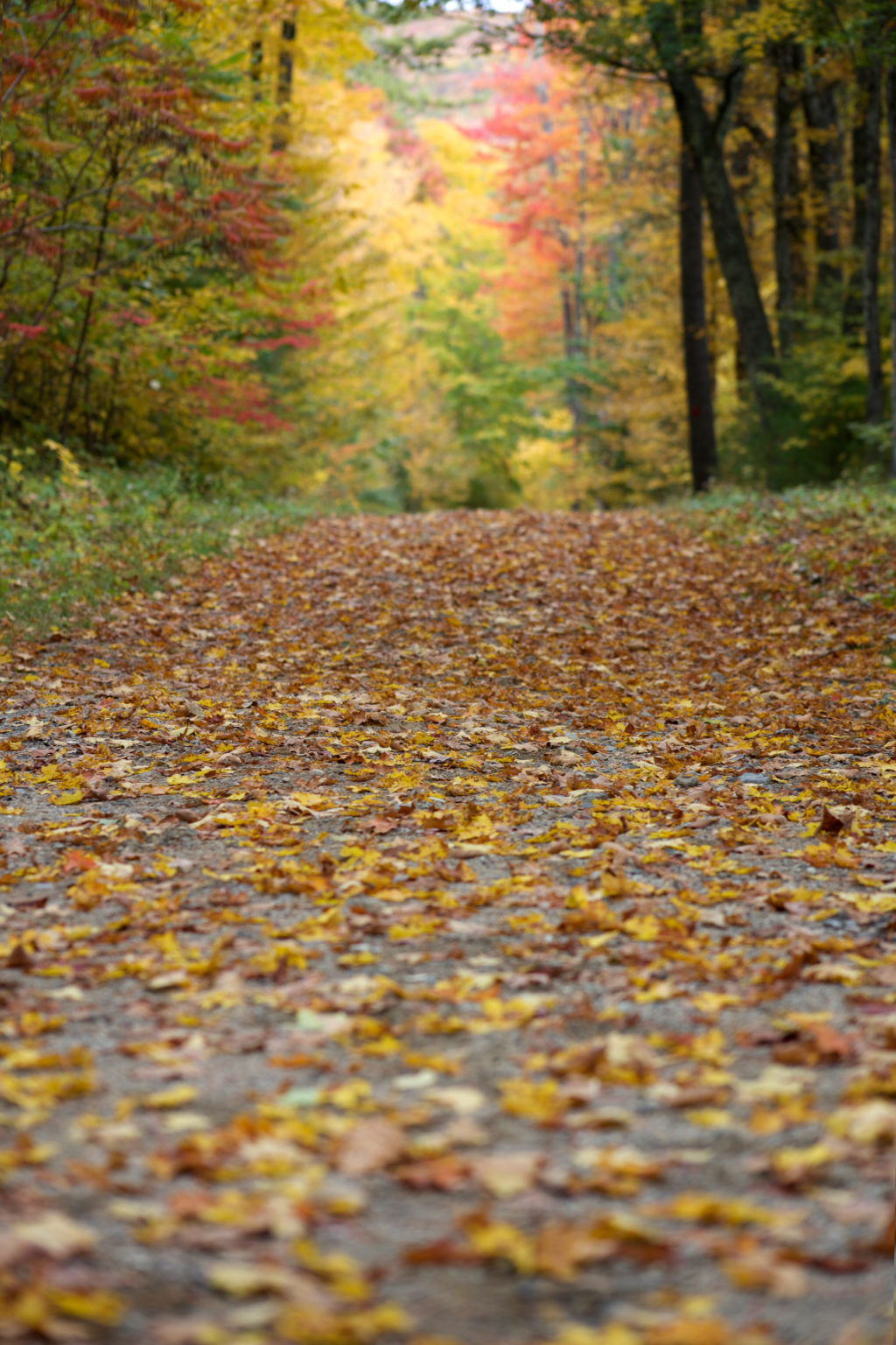 Fallen Leaves on Wide Path in the Woods