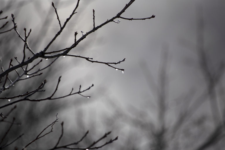 Dripping Tree Branches