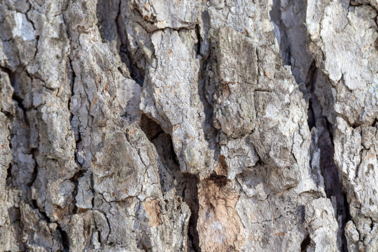 Rough Bark Texture