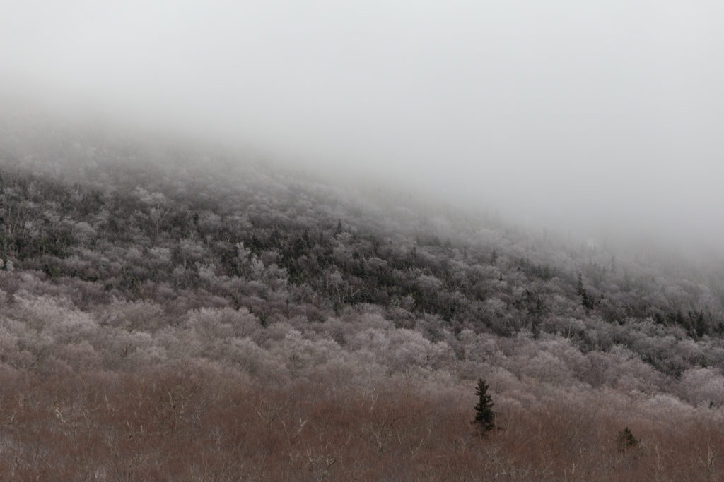 Frosted Treetops