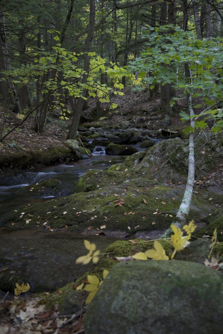 Small Wooded Stream in Early Fall