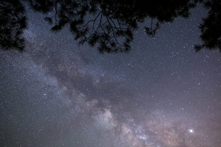 Milky Way with Tree Silhouettes