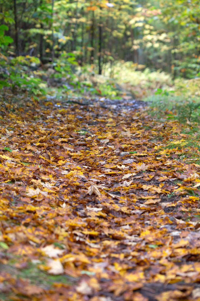 Leaf Covered Path