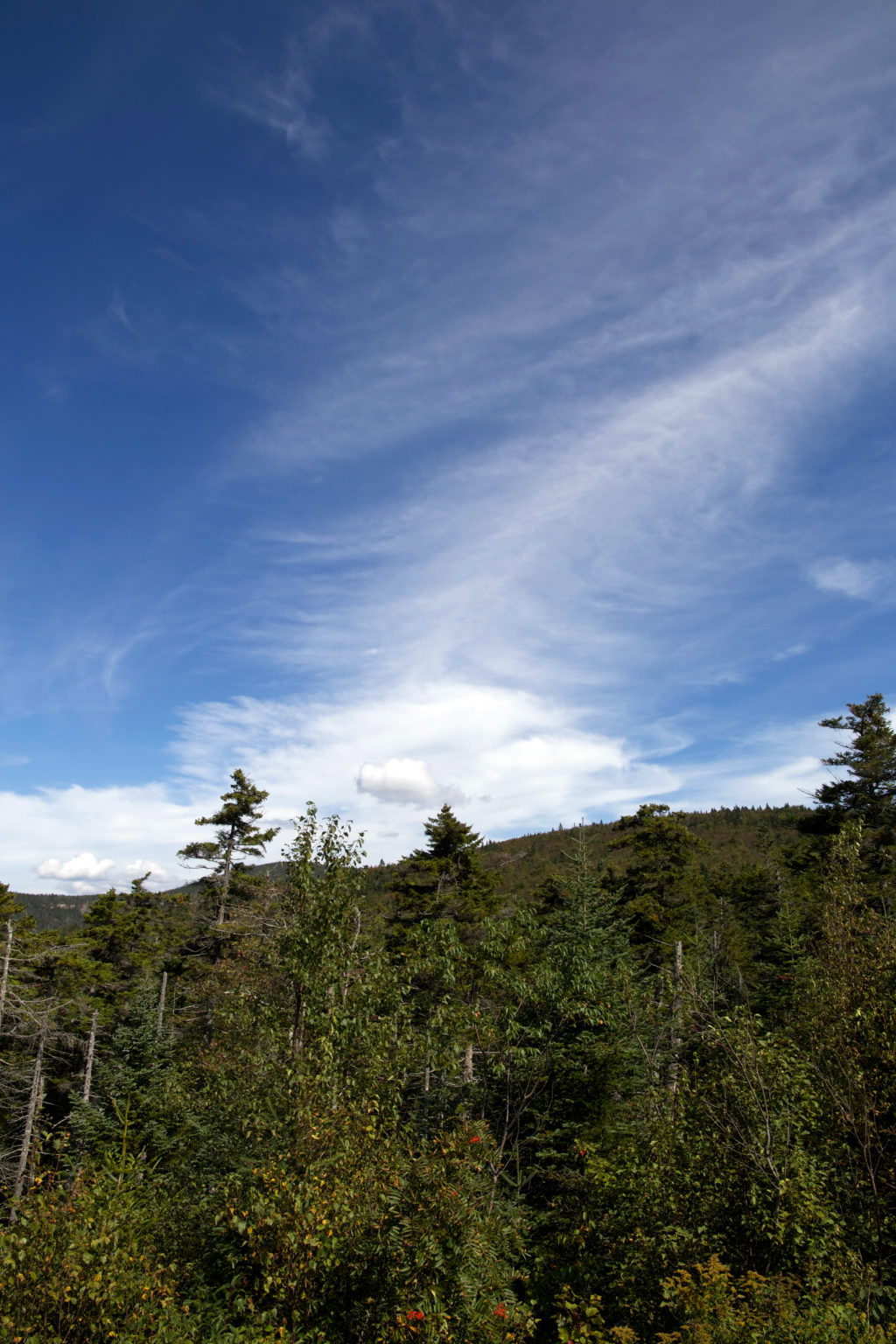 Thin Clouds in Blue Sky Over Forest
