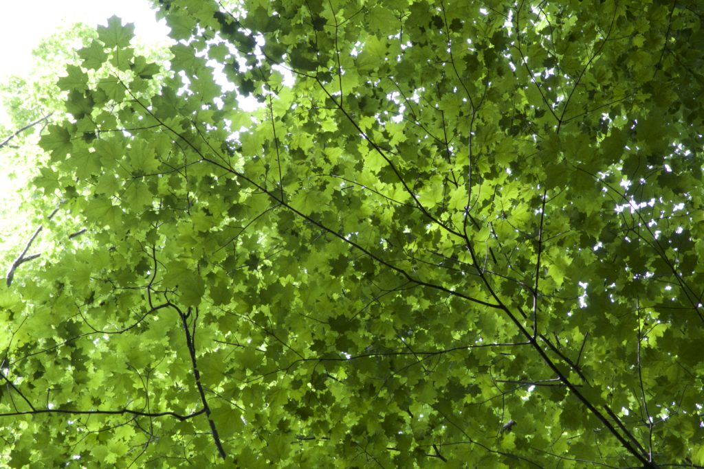 Green Layered Leaves