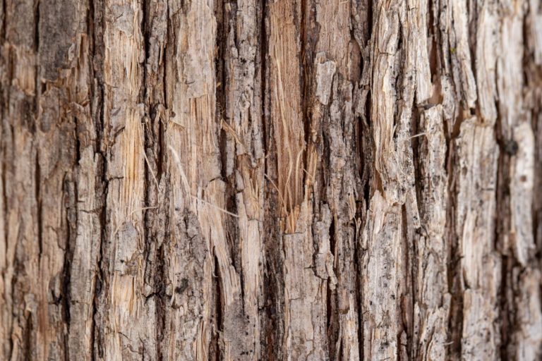Vertical Bark Texture