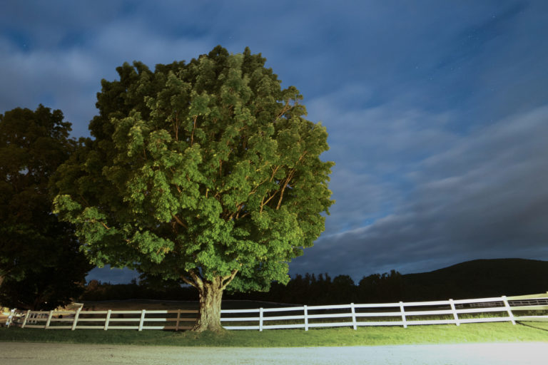Large Tree By Fence at Night