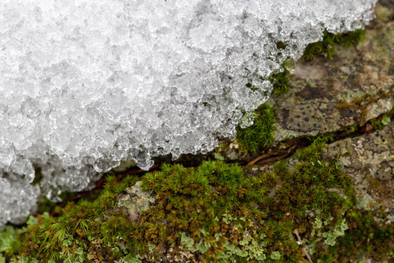 Snow on Mossy Rock