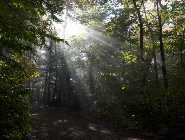 Misty Sunlight in the Forest