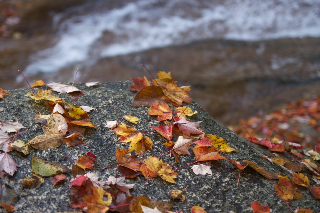 Autumn Leaves With Water in the Background