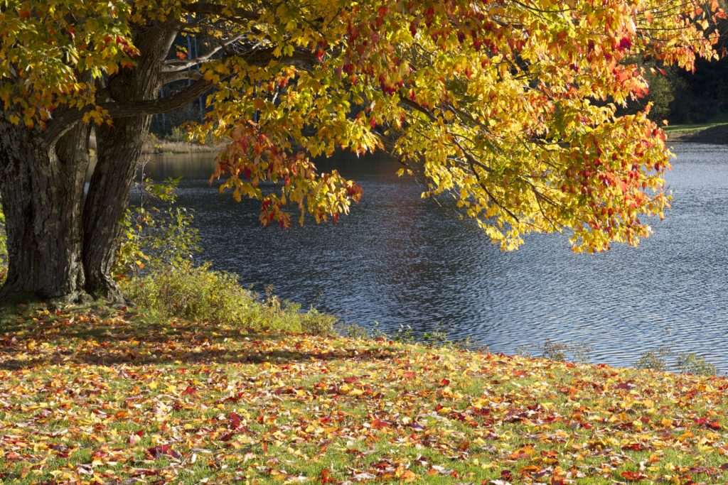 Fall Foliage by the Pond