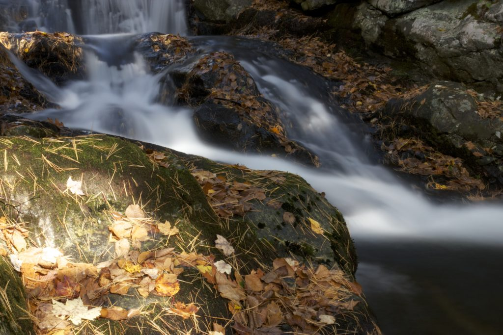 Running Water Over Rocks and Leaves