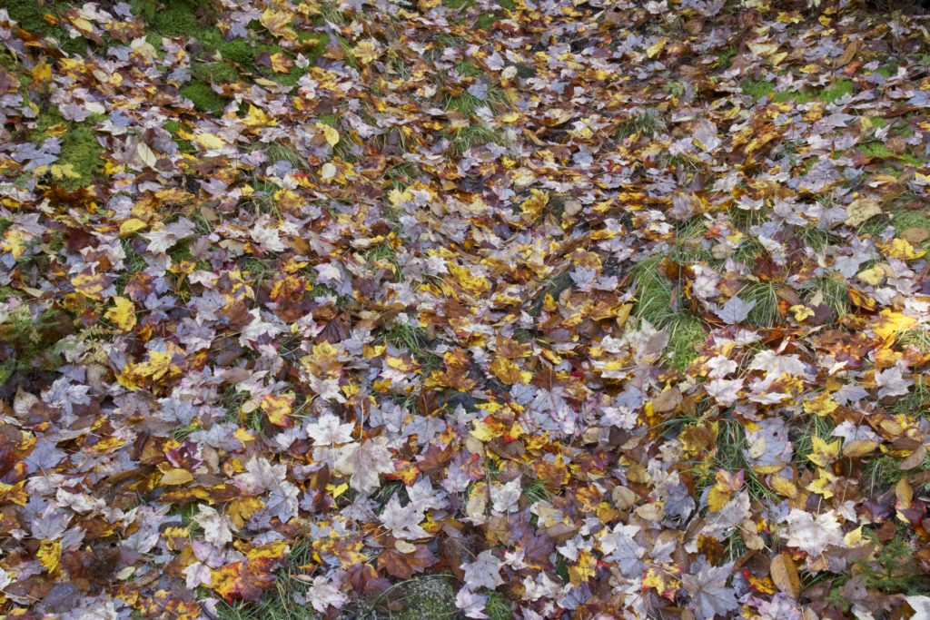 Forest Floor Covered in Leaves