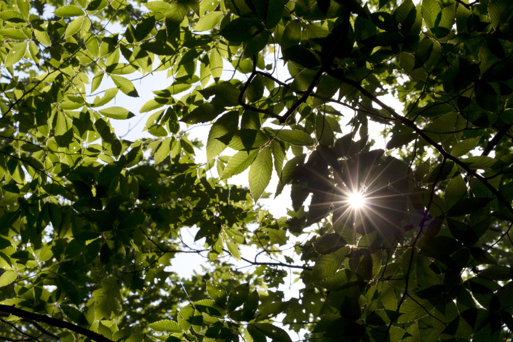 Sunlight Through Green Foliage