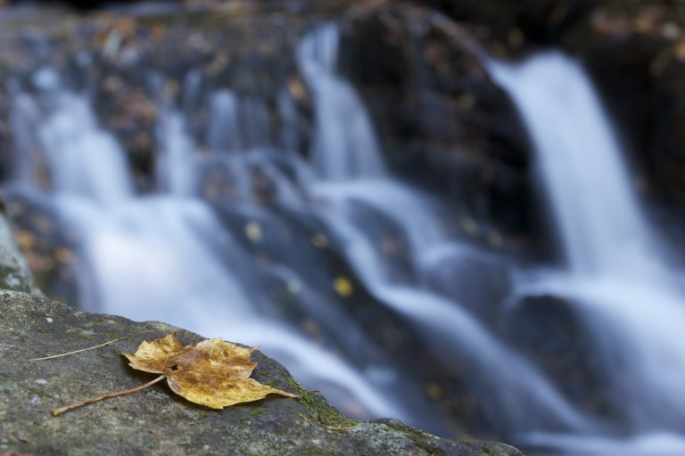 Fall Foliage and Flowing Water