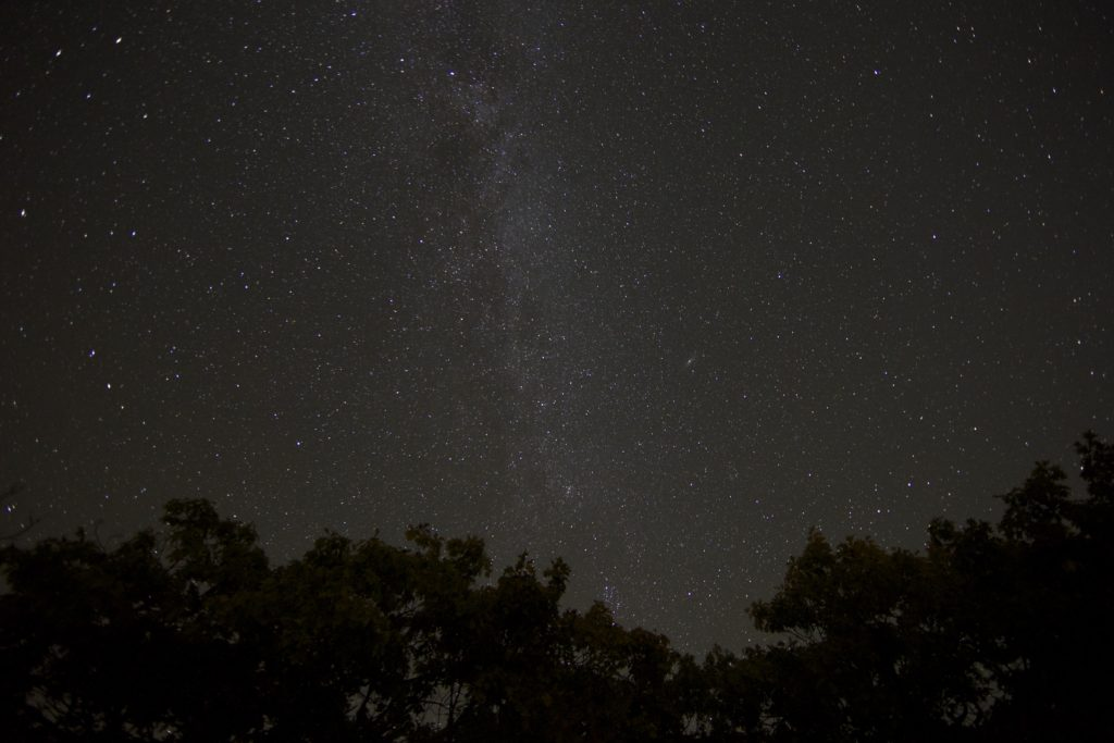 Milky Way Above Treetops