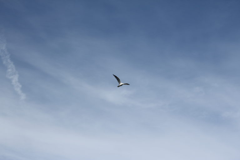 Seagull Flying in the Clouds