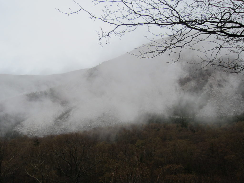 Misty Mountains and Trees