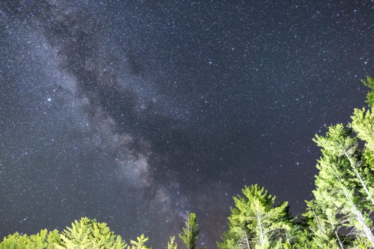 Milky Way Over Bright Trees