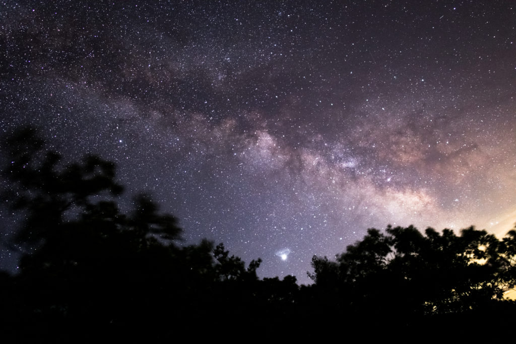 Milky Way Arching Over Trees