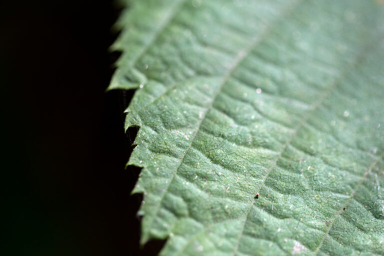 Jagged Leaf Macro
