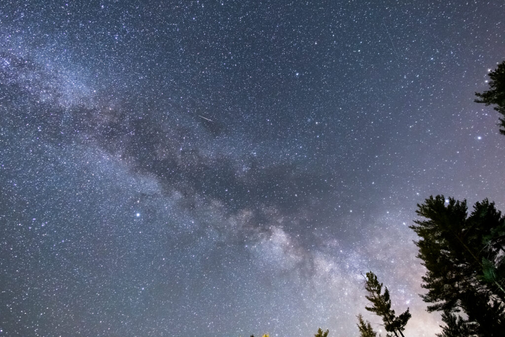 Milky Way Galaxy Core and Trees