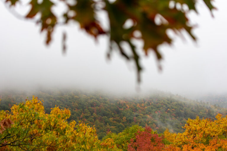 Foggy Fall Foliage Landscape