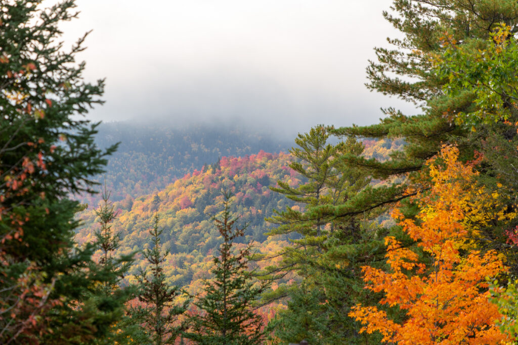 Majestic Autumn Forest and Clouds