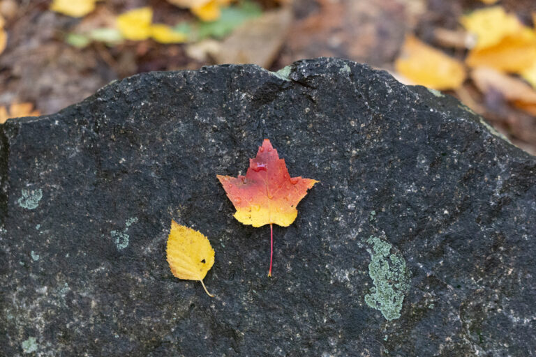 Autumn Foliage on a Rock