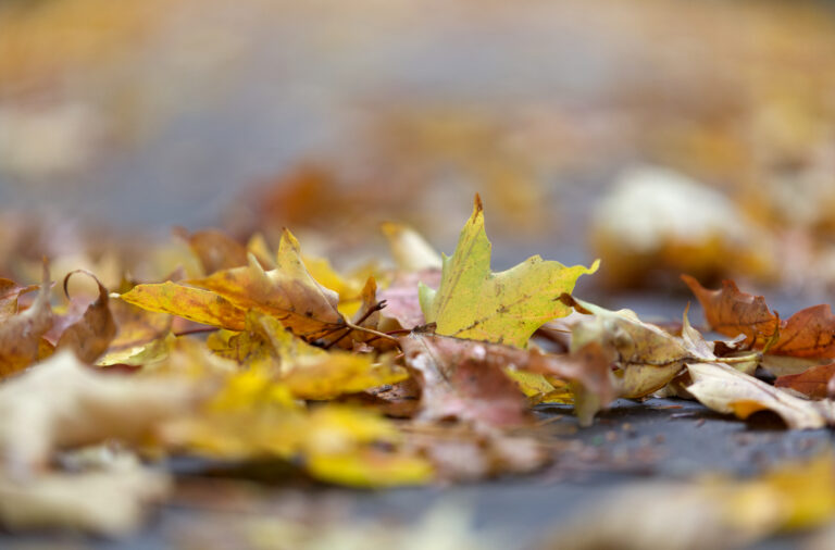 A Pile of Fallen Leaves
