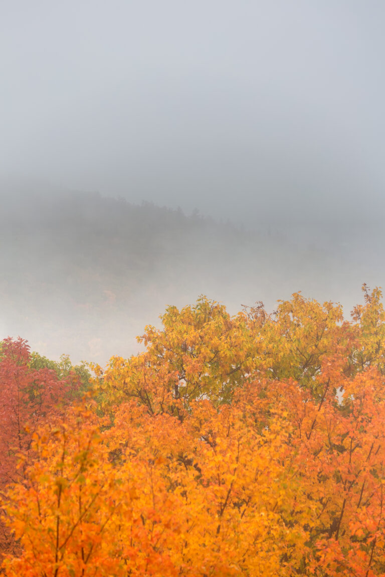 Autumn Foliage in Misty Mountains