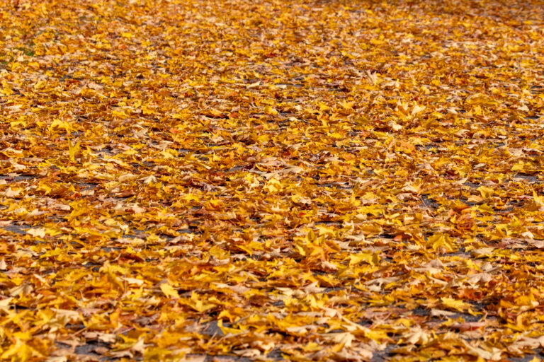 Beautiful Fallen Leaves in Autumn