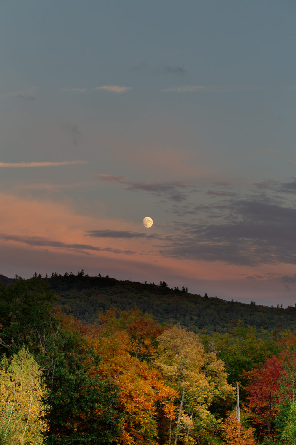 Moon Rising Over Autumn Trees