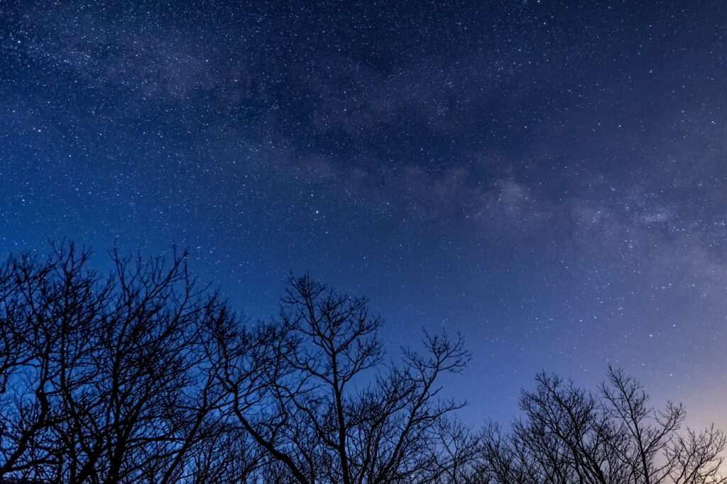 Blue Hour Milky Way Trees