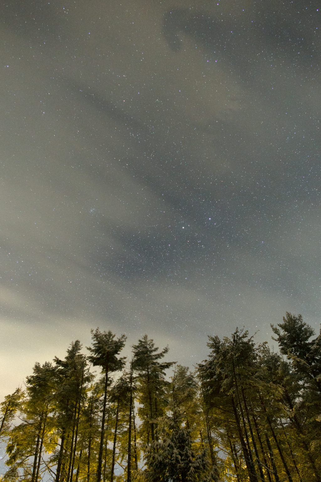 Tall Pines and Faint Stars