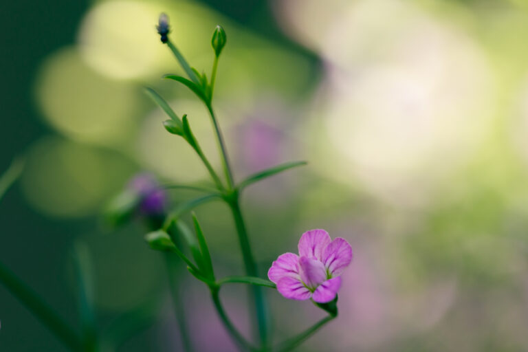 Purple and Pink Flower