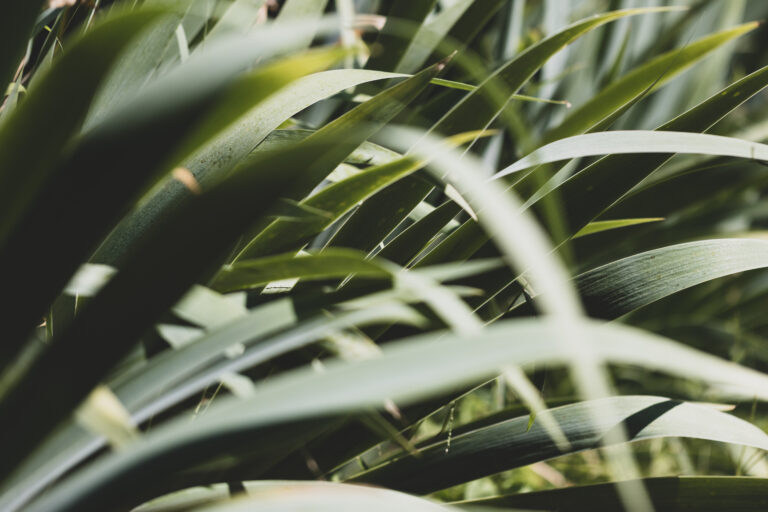 Muted Plant Background