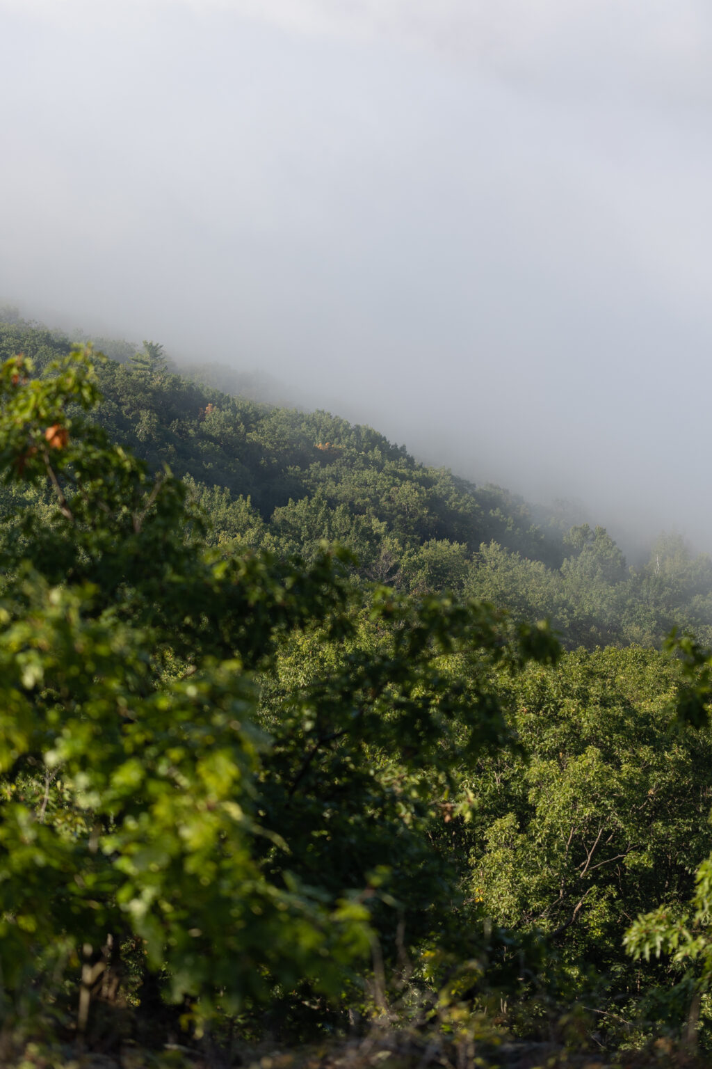 Fog Covering the Forest