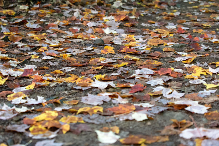 Dull Fallen Leaves