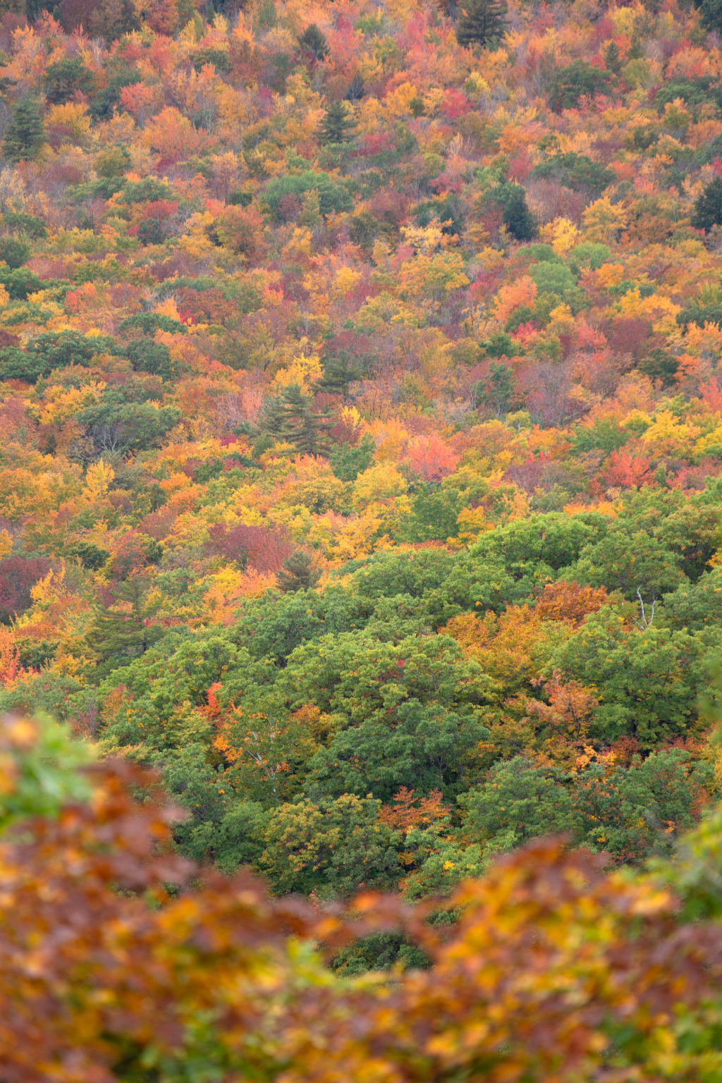 Fall Foliage on Sidehill