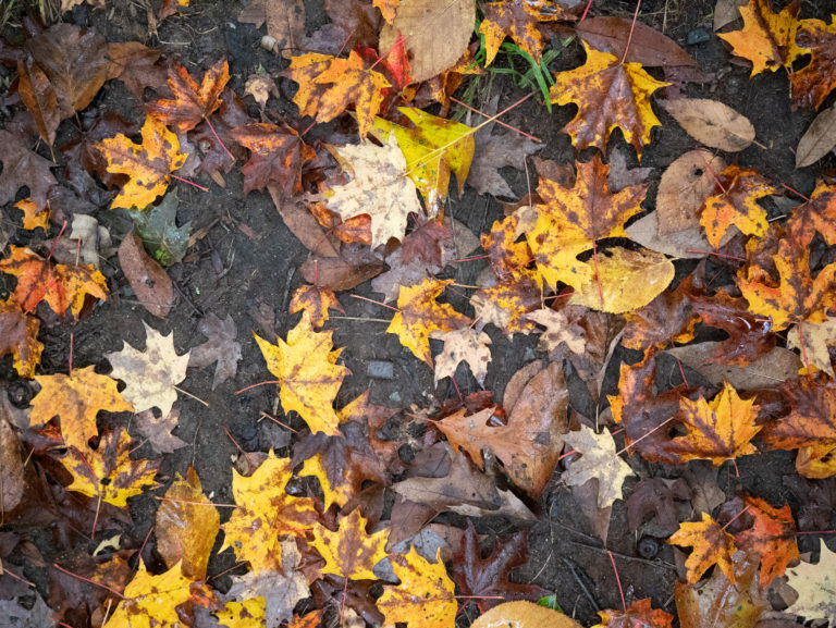Wet Fall Forest Floor