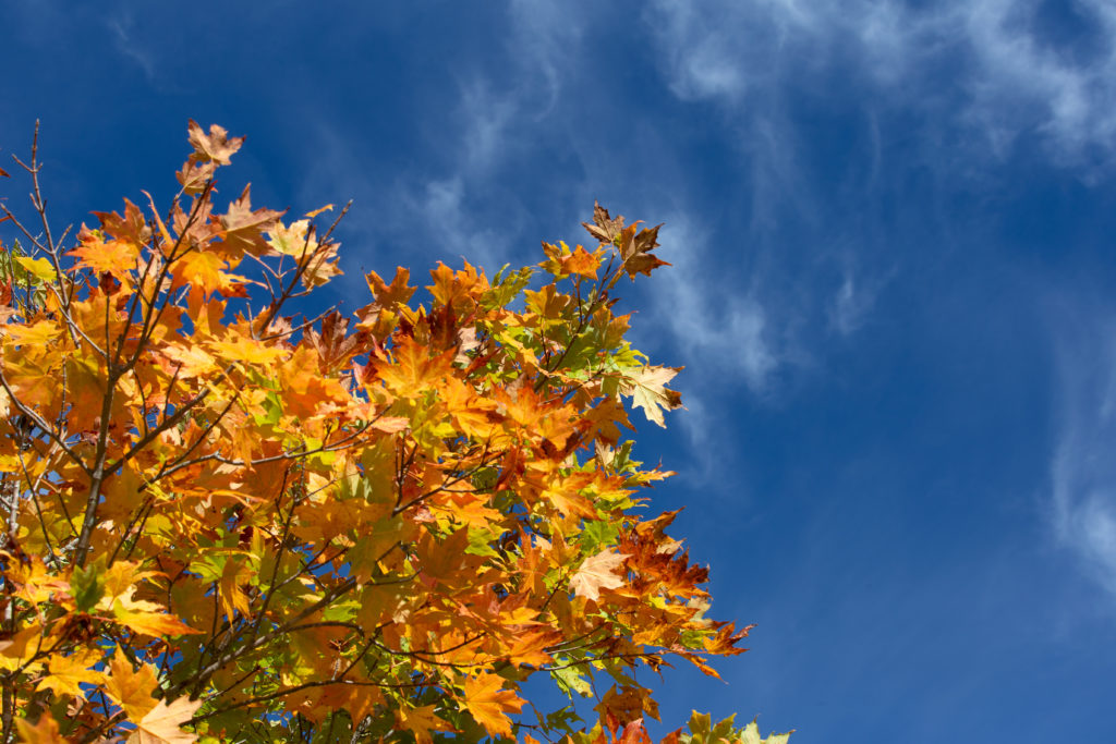 Turning Leaves Against Bright Sky