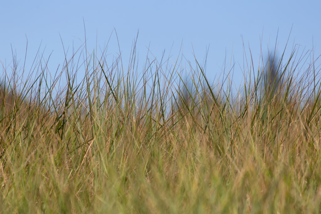 Summer Sea Grass