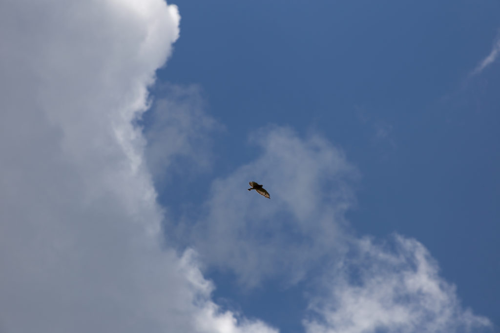 Bird Flying Out of a Cloud